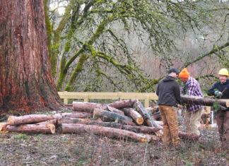 Fanno Creek Tree