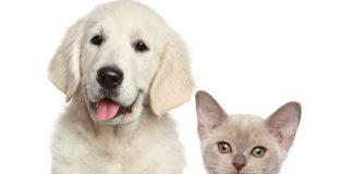 cat, dog, buying pets