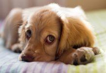 pets, pet help