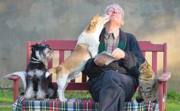 Pets, Family